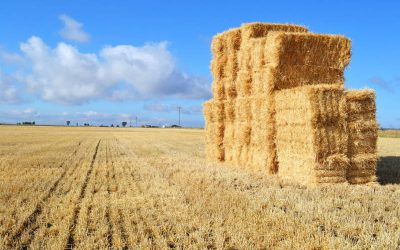 Why You Need a Hay Storage Shed
